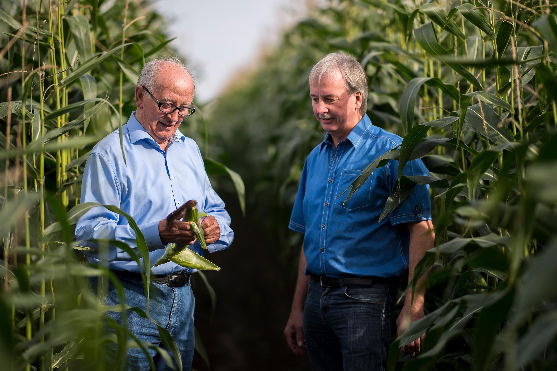 Qualitätscheck im Maisfeld bei einem Werbefotoshooting für die RVG durchgeführt von der Werbeagentur Medien Formen Werte aus Münster